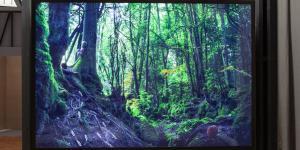 Leuchtkasten mit Waldmotiv.
