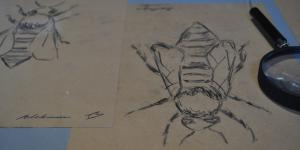 Zeichnung einer Biene neben der eine Lupe liegt.