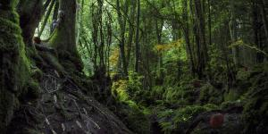 Shot of a forest