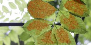 Tree leaf with pattern