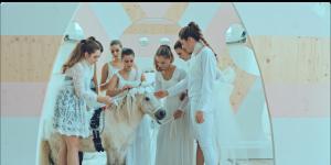 Das Foto zeigt ein weißes Pony umringt von sieben Mädchen in weißen Kleidern.
