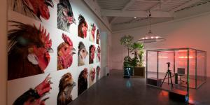 Installation with pictures of chicken