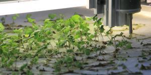 Machine produces algae