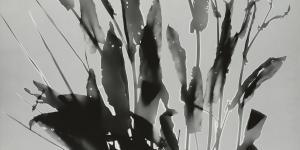 Photogram of sorrels