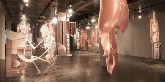 In a spacious exhibition room replicas of human bones are hanging from the ceiling.