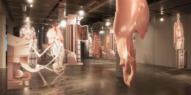 In einem weitläufigen Ausstellungsraum hängen verschiedene Nachbildungen menschlicher Knochen.