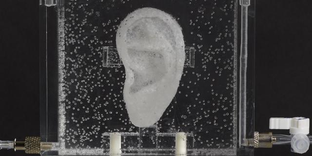Ein Ohr in einer Nährlösung
