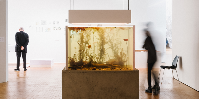 An aquarium in the exhibition »Reset Modernity!«