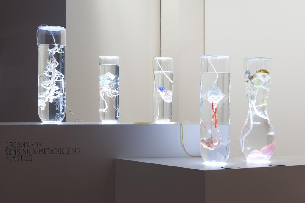 Fünf Glasbehälter sind mit klarer Flüssigkeit gefüllt und beinhalten eine jeweils unterschiedliche organische Struktur.