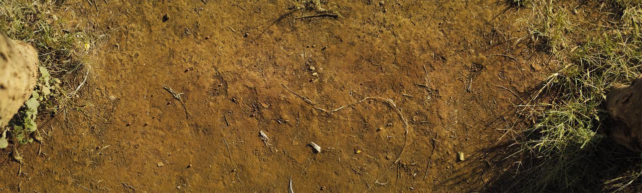 Das Foto zeigt einen trockenen, dürren Bodenausschnitt zwischen zwei Bäumen im Wald.