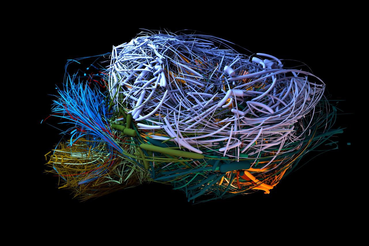 Visualisierung des Konnektoms eines Maus-Gehirns in verschiedenen Farben