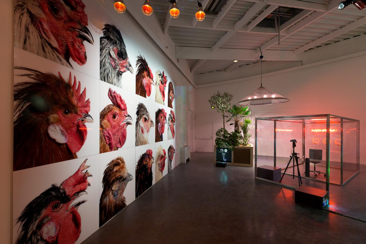 Installation mit Bildern von Hühnern