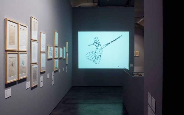 Blick in die Ausstellung »bit international«. An der linken Wand hängen Computergrafiken. In der Mitte ist eine Projektion des Films »Hummingbird« von Charles Csuri zu sehen..