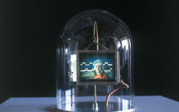 Lynn Hershman Leeson, Installationsansicht von Synthia,  2000–2002