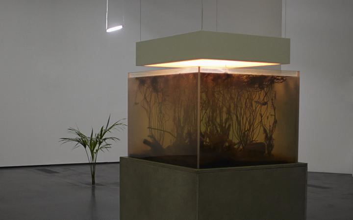Installation with plant