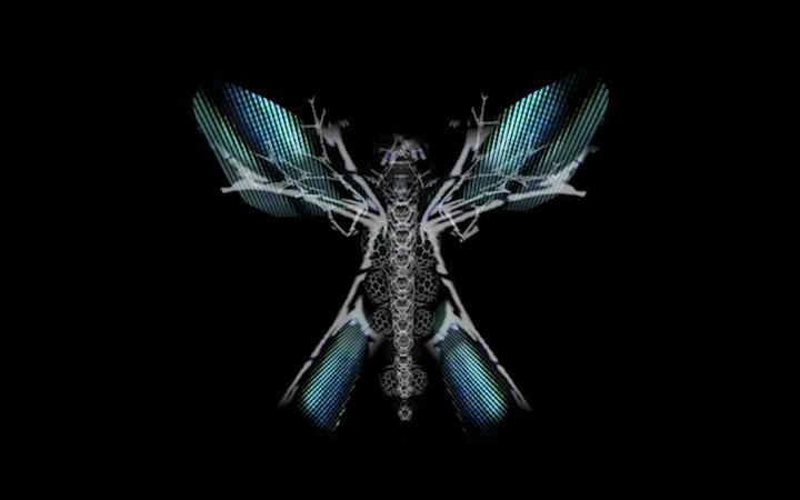 Skelett eines Schmetterlings