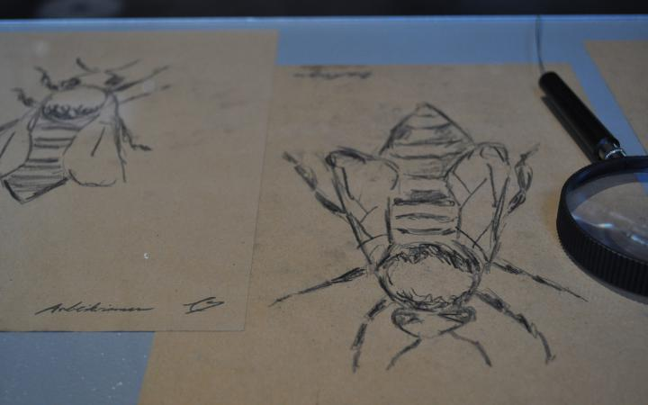 Drawing of a bee beside which is a magnifying glass.