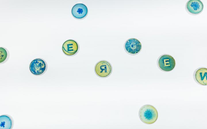 Zu sehen sind Petrischalen, in denen sich Bakterien rund um Buchstaben entwickelt haben.
