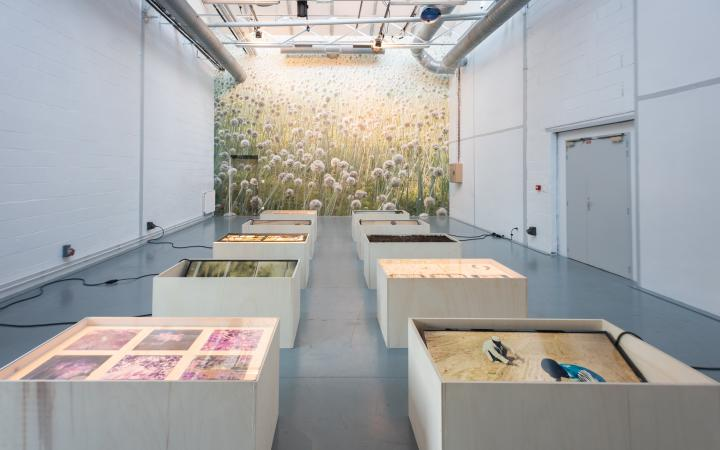 Photo of an exhibition room with a large photo print of a meadow in the background and white pedestals with exhibition objects in the foreground.