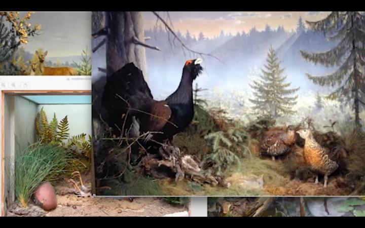 Auf einem Bildschirm sind drei Gemälde übereinander aufgezogen. Alle drei Bilder zeigen verschiedene Tiere in der Natur.