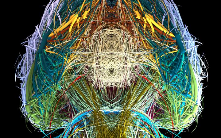 Visualisierung des Konnektoms eines Maus-Gehirns in verschiedenen Farben, Ansicht von unten