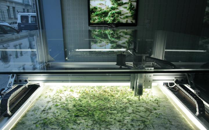 Machine produces algae