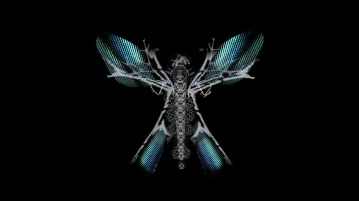 Skeleton of a butterfly