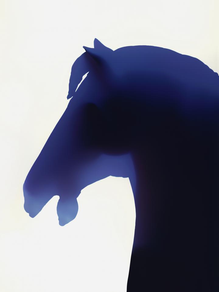 Fotogramm eines Pferdekopfes.