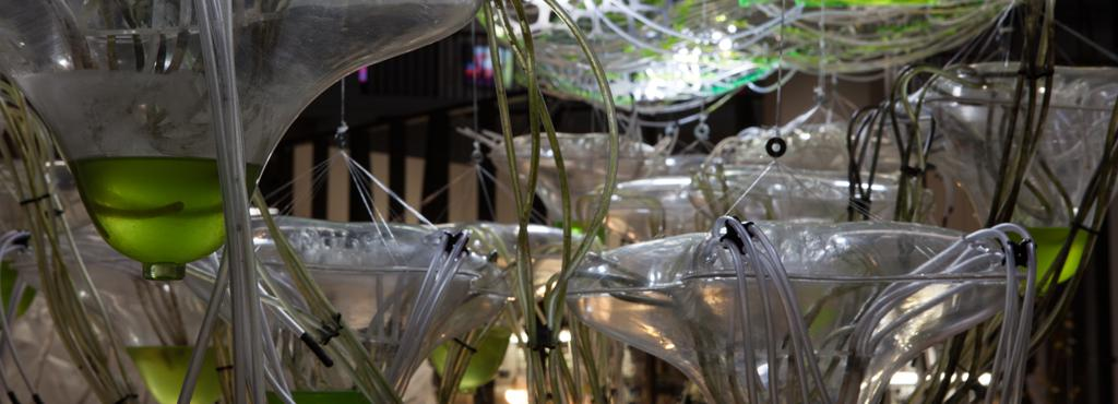 A cluster of transparent, organic plastic containers and hoses. The vessels are partially filled with a green liquid.