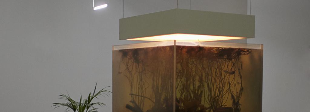 Installation mit Pflanze
