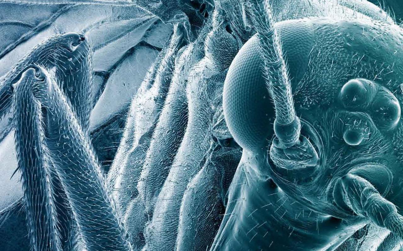 Foto einer Fliege mit negativ Fotofilter