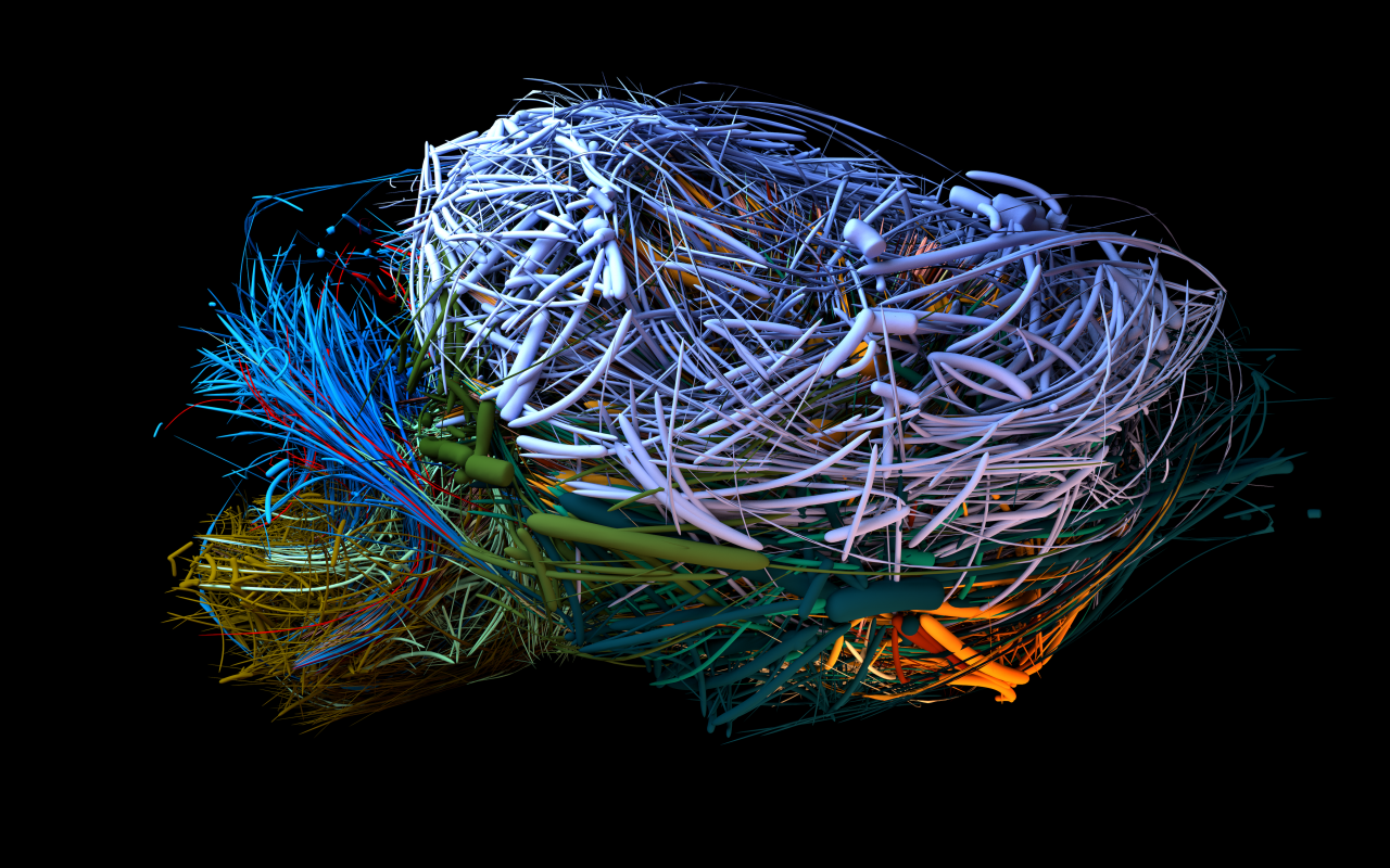 Visualisation of the connectome of a mouse brain in different colours