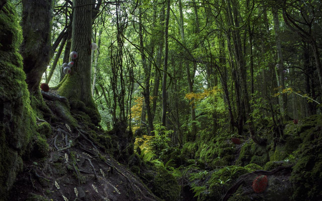 Aufnahme eines Waldes