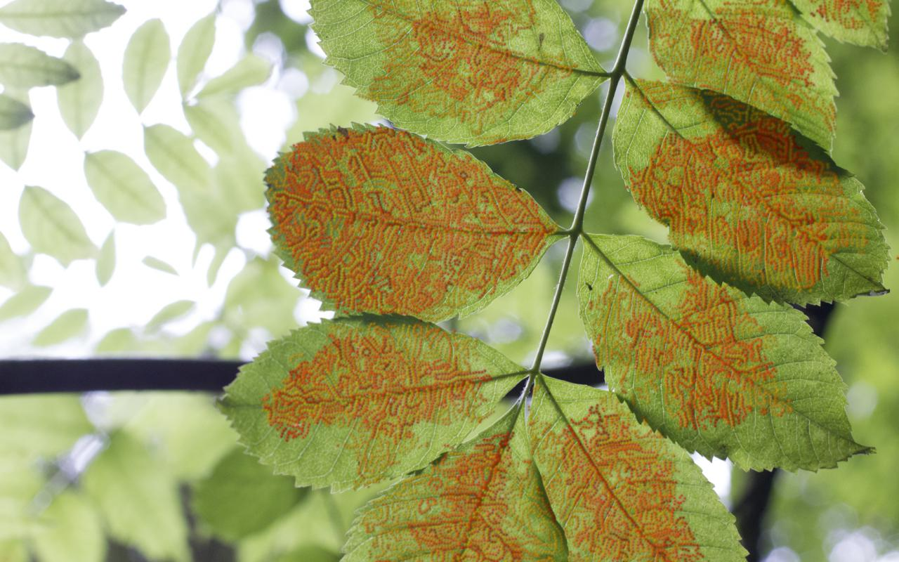 Tree leaf with pattern