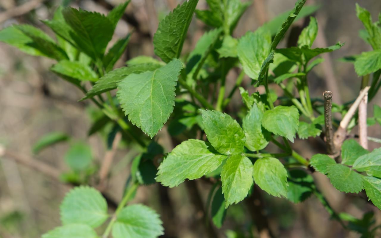 Eine Nahaufnahhme grüner Blätter
