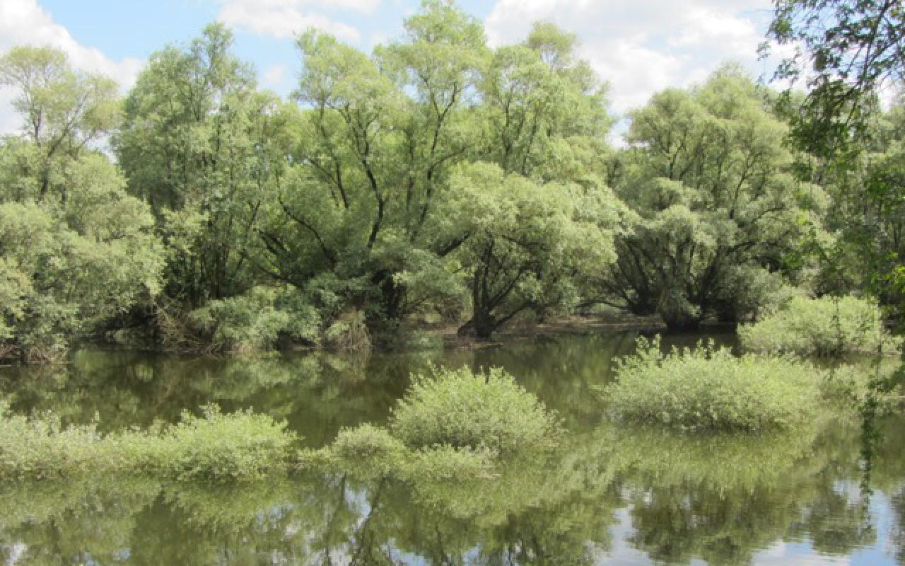 Zu sehen ist die Spiegelung eines Waldes in dem davor liegenden Gewässer.