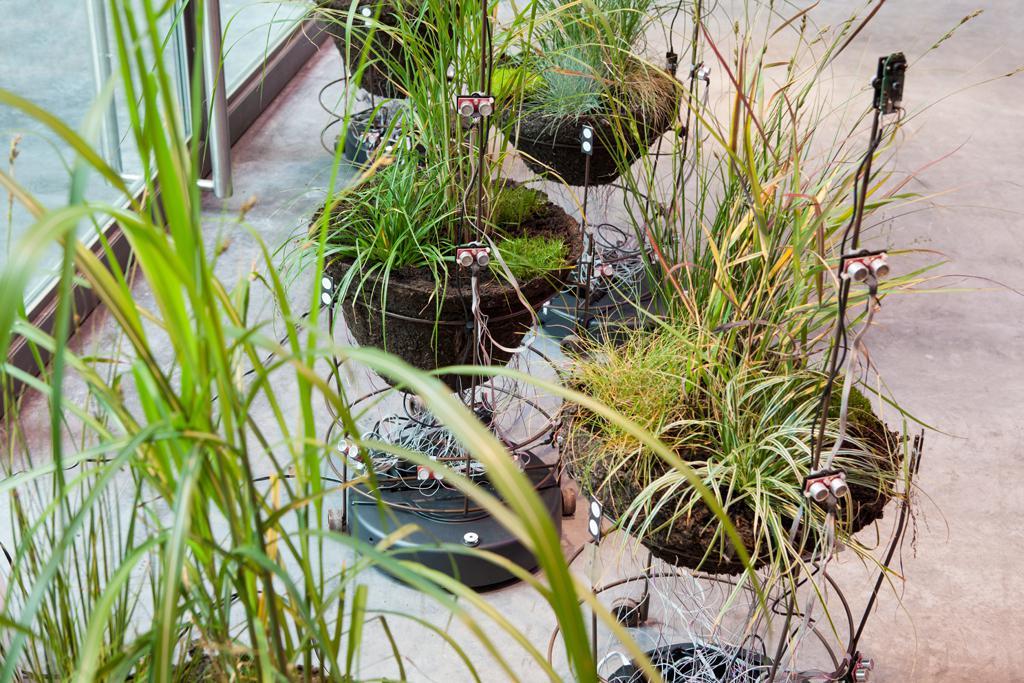 Kleine Pflanzen Einheiten auf rollbaren Metallgestell. Die Pflanzen sind mit Elektrotechnik ausgestattet.