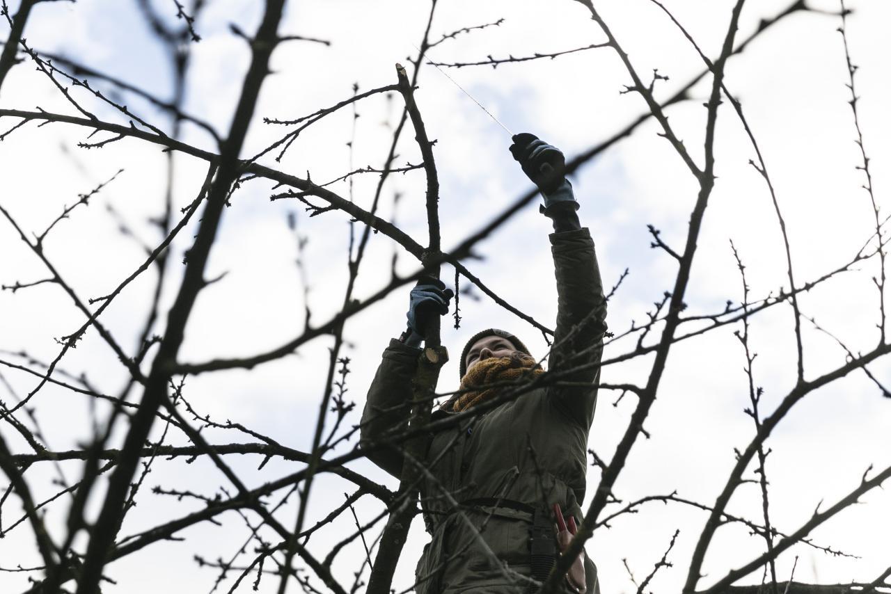 Eine Frau schneidet die Äste eines Baums.