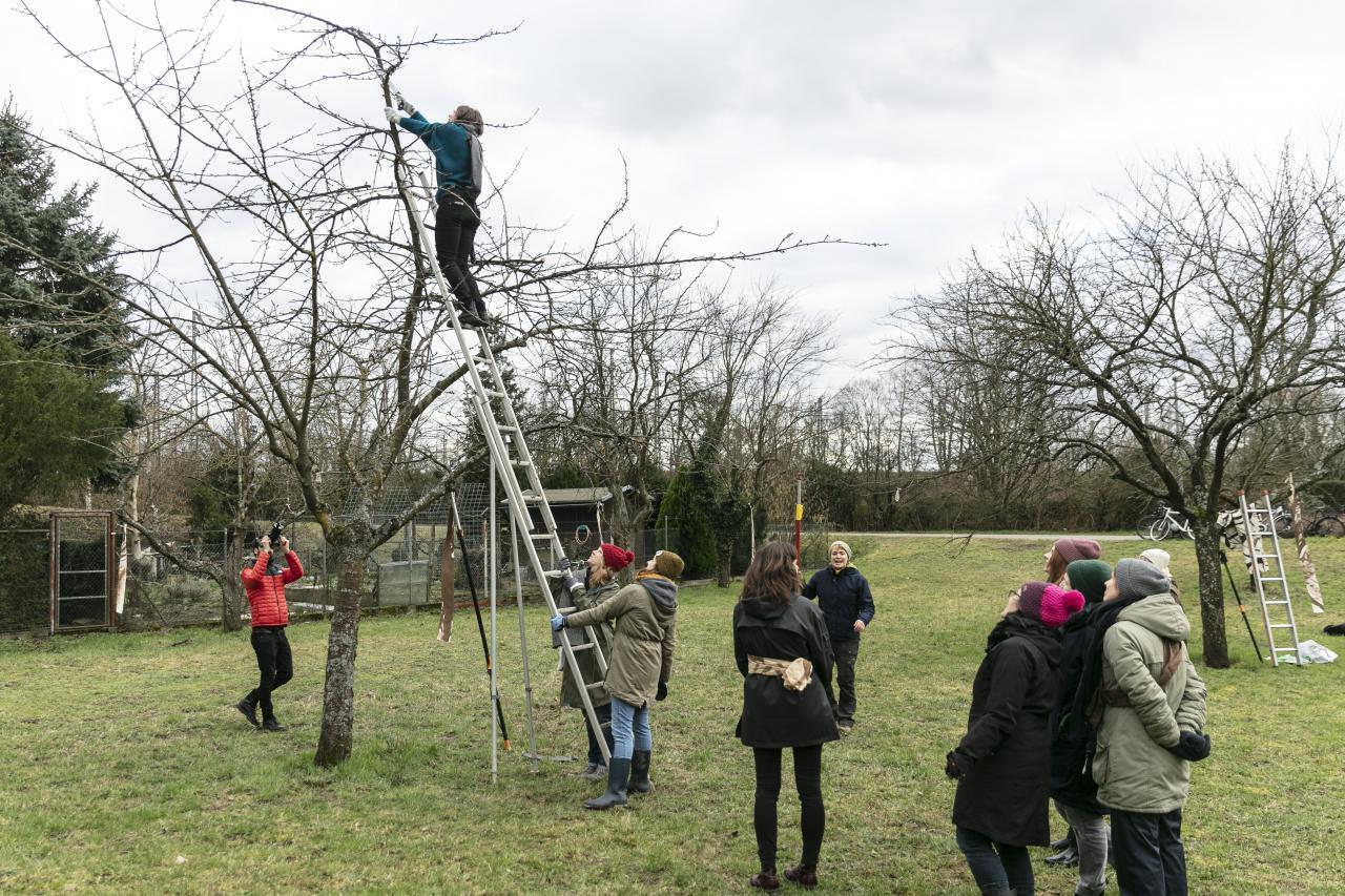 Eine Gruppe von Menschen stehen auf einer Wiese und eine Frau schneidet auf einer Leiter Äste von einem Obstbaum.
