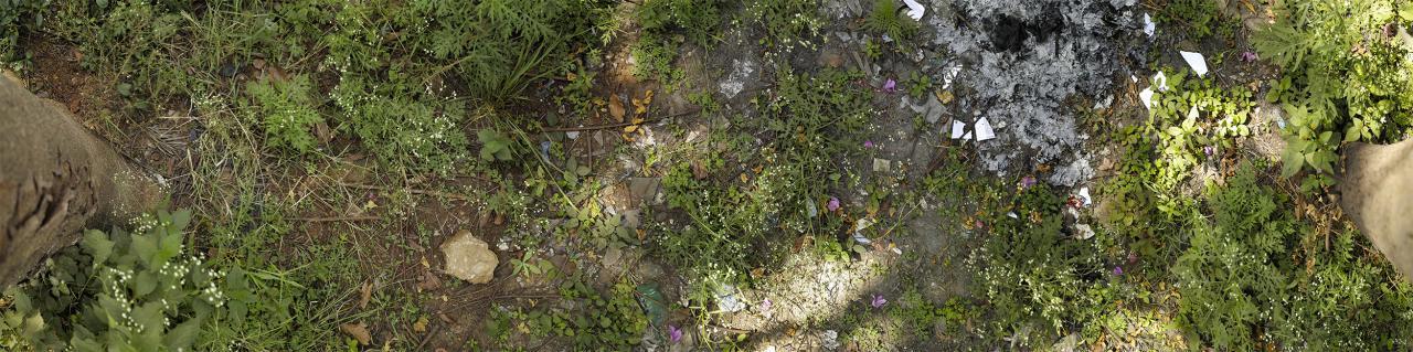Das Foto zeigt den Boden des Waldes zwischen zwei Bäumen durch die das Sonnenlicht kleine Lichtstrahlen auf dem Moos bewachsenen Boden aufweisen..