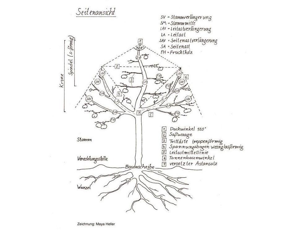 Zeichnung einer idealen Baumstruktur.