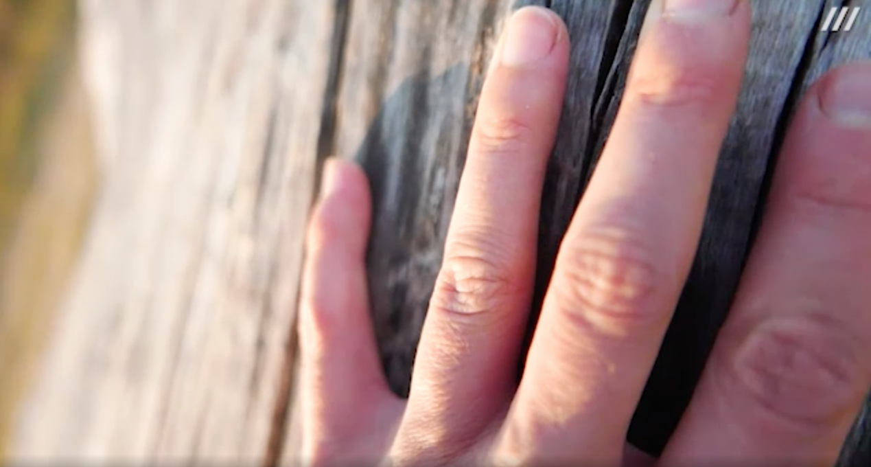 The image shows a close-up of fingers of a hand on a tree.