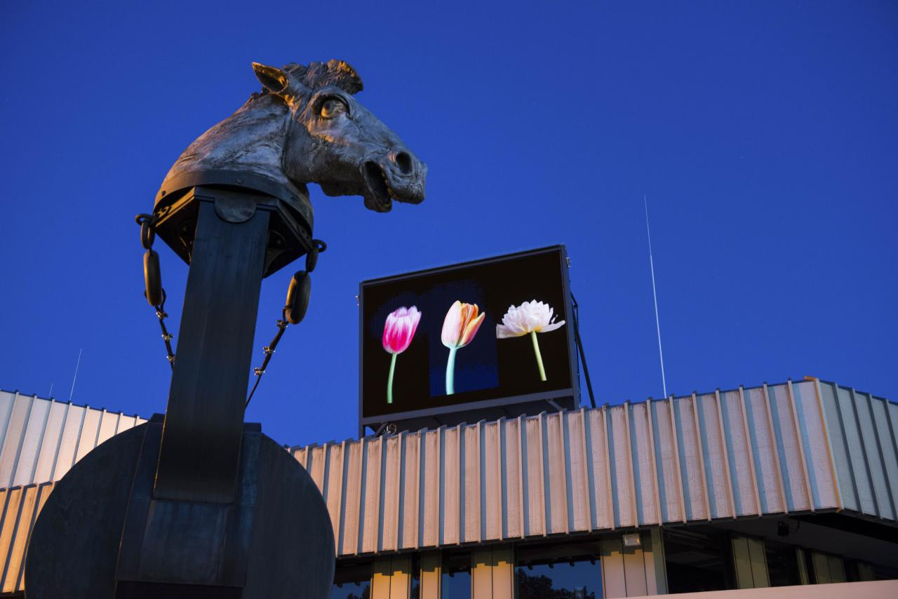 A screen placed above the Badisches Landestheater in Karlsruhe shows three colorful tulips.