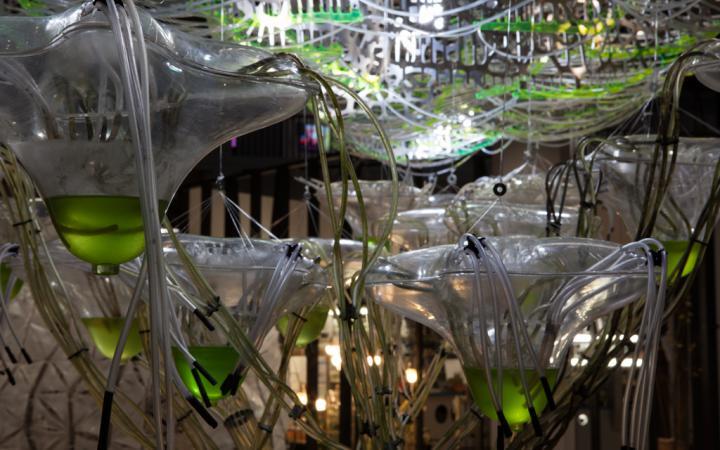 Eine Traubeaus transparenter, organischer Kunststoffgefäße und Schläuchen. Die Gefäße sind teilweiße mit einer grünen Flüssigkeit gefüllt.