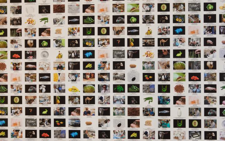 Kleinformatige Fotowand mit Bildunterschriften.