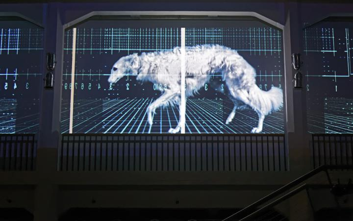 A greyhound projected on a screen