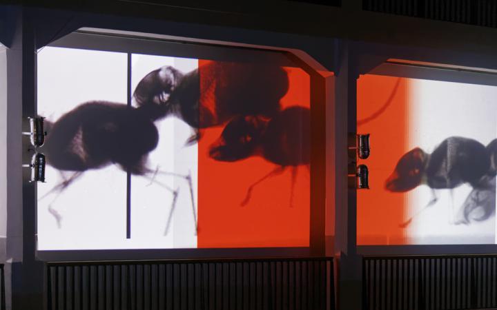 Schatten von Springmäusen werden auf eine Leinwand projiziert.
