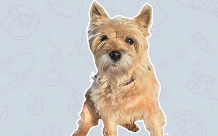 In einem Chatfenster ist ein Hundesticker zu sehen.