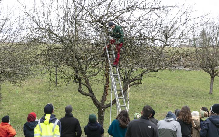 Ein Mann klettert auf einer Leiter einen Baum hoch während eine Gruppe zusieht.