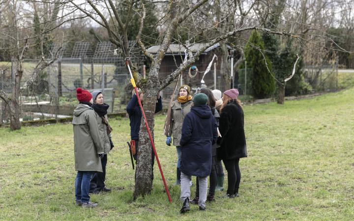 Eine Gruppe von Menschen stehen auf einer Wiese um einen Baum.